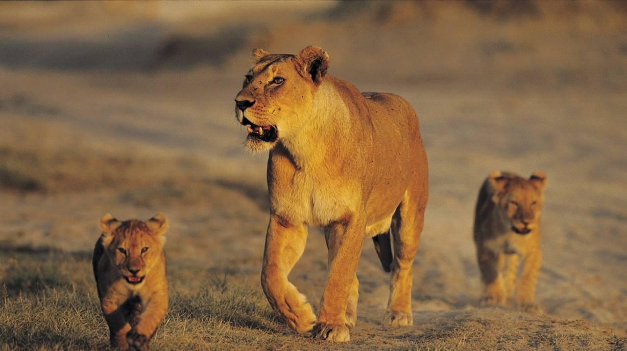 Safari tanzanie : offrez-vous un moment magique