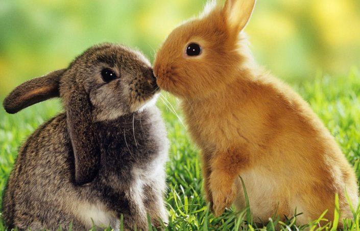 Lapin : je vous explique comment réaliser un lapin à la moutarde en peu de temps